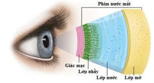 Nguyên nhân gây ra bệnh khô mắt